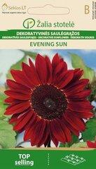 Saulespuķe EVENING SUN sarkana cena un informācija | Saulespuķe EVENING SUN sarkana | 220.lv