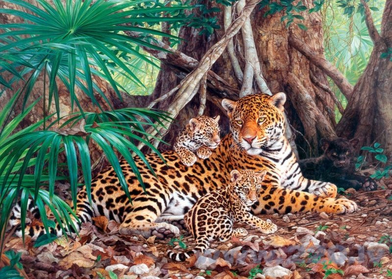 Пазл Costarland Jaguars In The Jungle, 3000 дет.