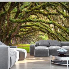 Foto tapete - Tree embrace