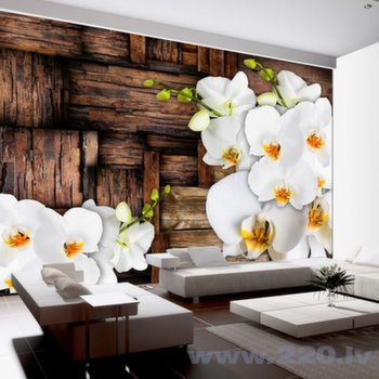 Foto tapete - Blooming orchids