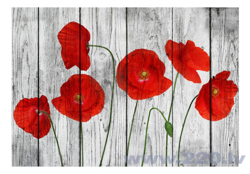 Foto tapete - Tale of Red Poppies atsauksme