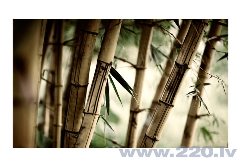 Foto tapete - Fog and bamboo forest cena