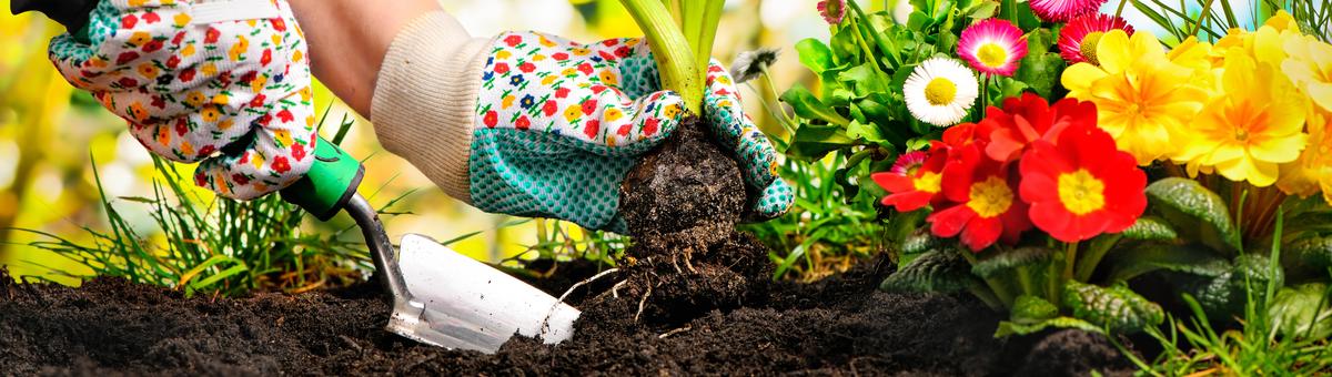 Organizējam dārzu zemes gabalā: kas ir vissvarīgākais, kas jāzin?